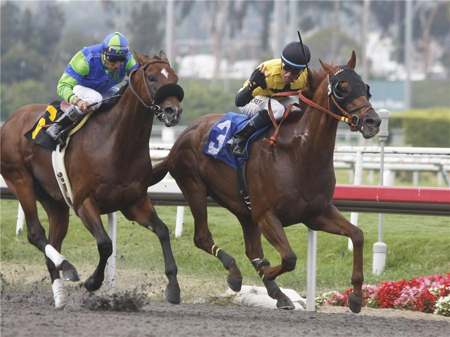 HORSE WAGERING - Online Horse Betting Tips, Terms Strategy